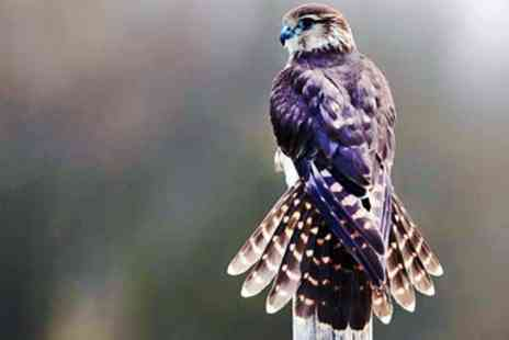 Imperial Bird Of Prey Academy - Half day falconry experience with guest in Essex - Save 20%