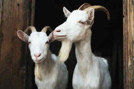 Herrings Green Activity Farm - Goat walking experience for one, two or family of four - Save 64%