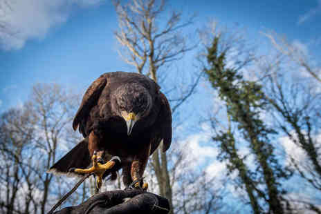 North East Falconry - One hour or 90 minute bird of prey experience for one or two - Save 68%