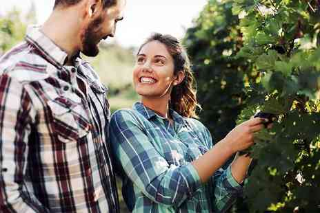 Carr Taylor Vineyard - Vineyard tour, wine tasting and buffet lunch for two or four - Save 63%
