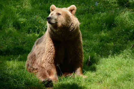 Dartmoor Zoo - Bear Encounter for Two at Dartmoor Zoo - Save 0%