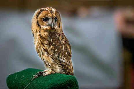 CJ's Birds of Prey - Two hour birds of prey experience or owl encounter for one, two or four - Save 80%