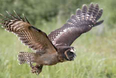 CJ S Birds of Prey - Two Hour Birds of Prey or Owl Encounter Experience - Save 80%