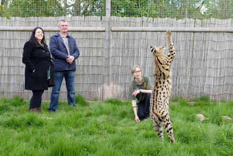 Virgin Experience Days - Big Cat Encounter For Weekends - Save 0%