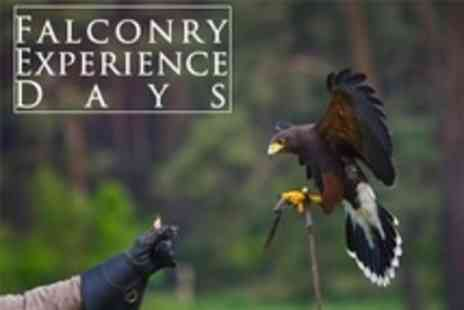Chris Miller Falconry Experiences - Bird of Prey Handling - Save 81%