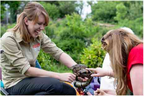 Dartmoor Zoo - Reptile and Bug Experience - Save 0%
