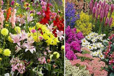 PlantStore - XL perennial border plants collection - Save 67%