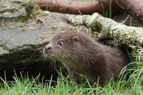 Buckfast Butterflies & Otter Sanctuary - Child, Adult or Family Entry - Save 19%