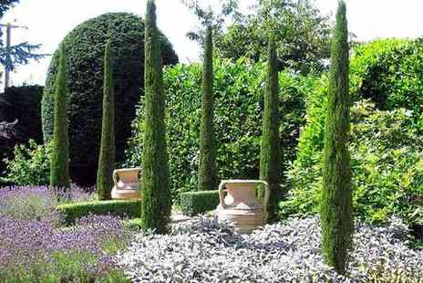 PlantStore - Pair of extra large Italian Cypress trees - Save 0%