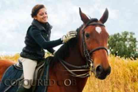 Coloured Cob - 3hr equestrian experience including lesson, trek, stable management - Save 52%