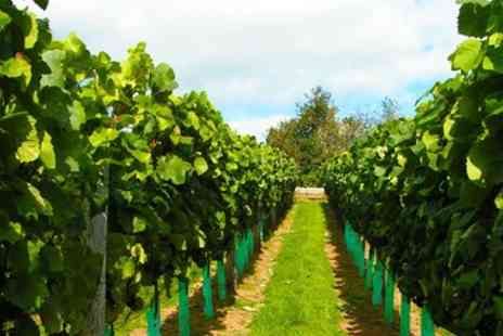 Lily Farm Vineyard - Devon vineyard tour and wine tasting for Two - Save 55%