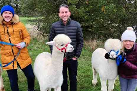Middle England Alpaca Farm - Alpaca walking tour for 2 in Warwickshire - Save 34%