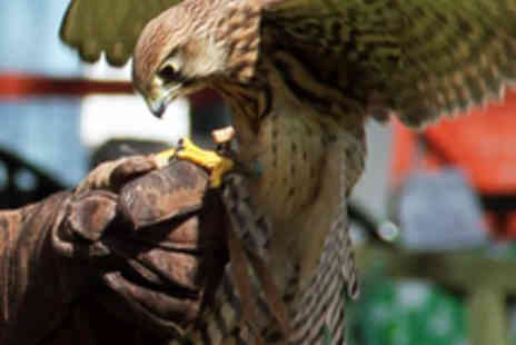 Gentleshaw Wildlife Centre - Two-Hour Bird of Prey Experience - Save 73%