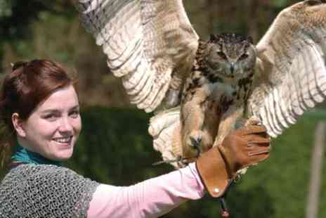 The Hawking Centre - Full Day Falconry Experience - Save 0%