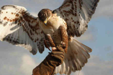 Raptor World - Two Hour Bird Handling Experience - Save 61%