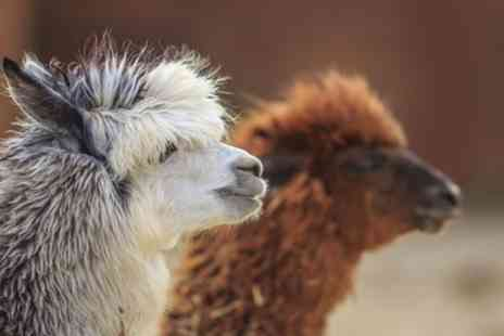 Eagle Heights - Animal Park Entry and Alpaca Walk for One or Two - Save 37%