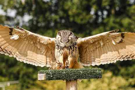 Yarak Birds of Prey - Birds of prey flying and handling experience - Save 44%