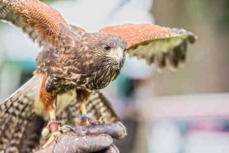 CJ's Birds of Prey - Two hour birds of prey experience or owl encounter for one person - Save 80%