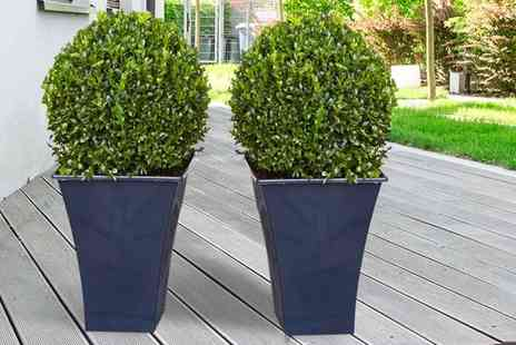 PlantStore - Pair of quality topiary buxus balls - Save 62%