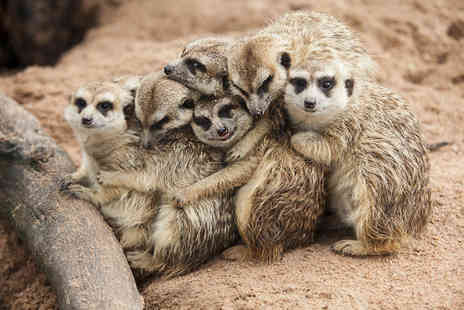Willow Tree Family Farm - One hour meet the meerkats experience and farm entry for two people - Save 55%