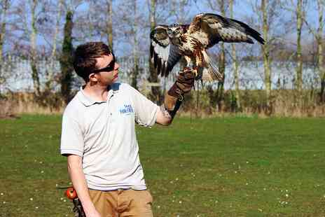Fens Falconry - Hands on falconry experience - Save 50%
