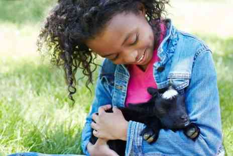 Bluebell Wood - One Year Goat Adoption Package - Save 40%