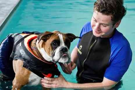 K9 Swim - 30 Minute Induction Dog Swim with Hydrotherapist and Owner - Save 54%