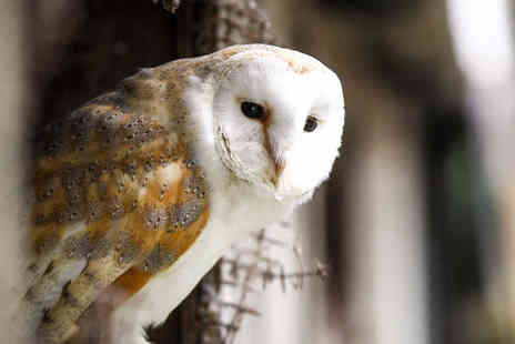 Shropshire Falconry - 90 minute owl experience for one person - Save 71%