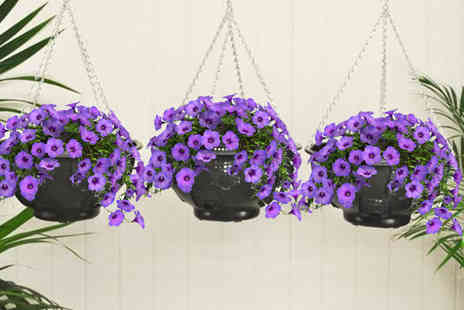 Pricebuster UK - Set of two easy fill hanging garden baskets - Save 40%