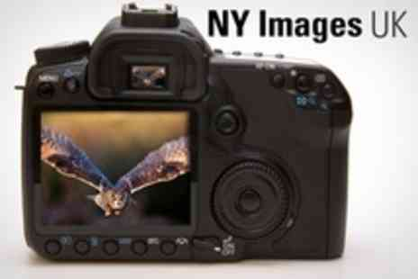 NY Images UK - Wildlife Photography Workshop For One Person - Save 60%