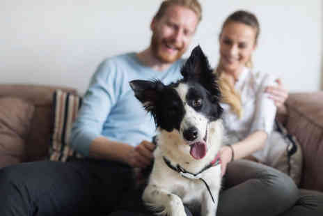 Holly and Hugo - Online pet adoption course CPD certified - Save 88%