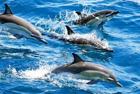 Orca Sea Safaris - 2 Hour Dolphin spotting safari - Save 33%