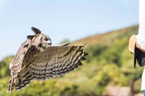 Exmoor Experience - Fly Back to Nature with Owls - Save 0%
