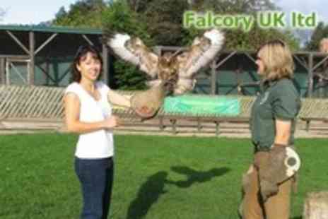 Falconry UK - Falconry Family Day Ticket - Save 79%