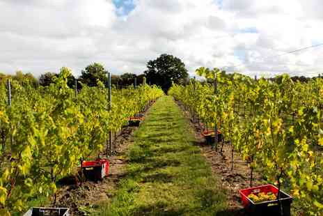 Balfour Hush Heath Estate - Kent wine estate tour, tasting and platter for 2 - Save 0%