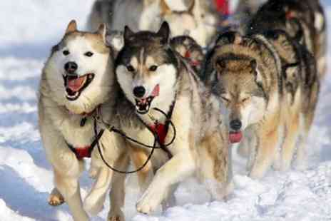 UK9 Dog Sport Centre - 90 Minute Sled Dog Experience for One or Two - Save 47%