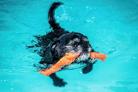 K9 Swim - Introductory assisted dog swim with a hydro therapist and owner - Save 54%