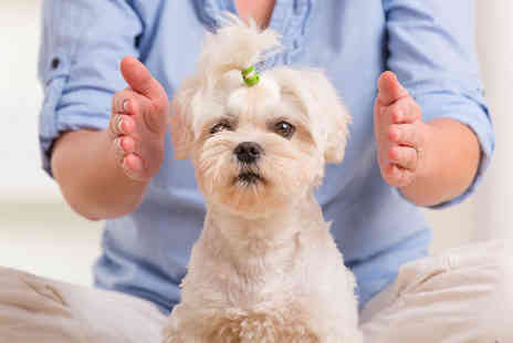 Oplex Careers - Animal reiki course - Save 92%