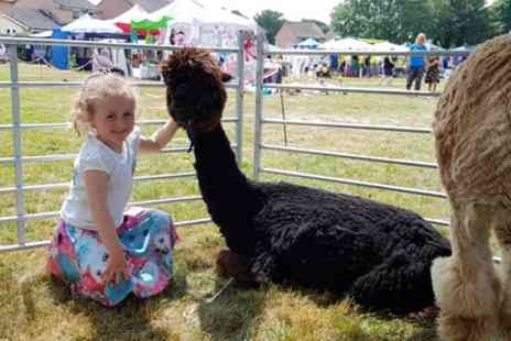 Happyard - Alpaca Walk for Up to Three or Family of Up to Five - Save 33%