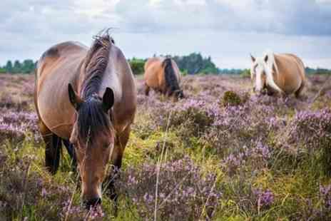 T & T Southampton - New Forest Day Out Private Excursion - Save 0%