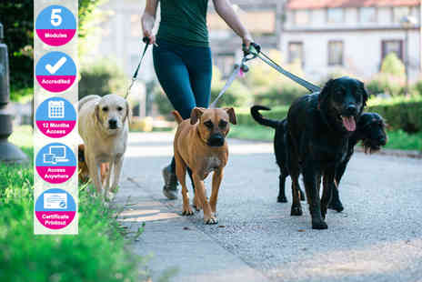 International Open Academy - Accredited dog walking course - Save 88%