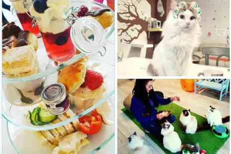 Rabble Rags Manor Cat Cafe - Afternoon tea for two people - Save 60%
