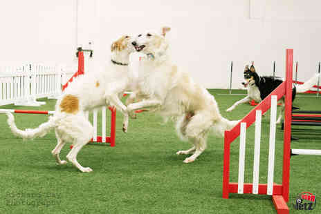Action Petz - Dog park experience with hot drink and cake for two people and puppuchino and cake for one dog - Save 54%