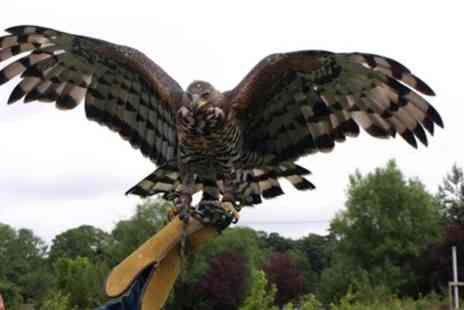 CJ's Birds of Prey - Two Hour Birds of Prey or Owl Encounter Experience - Save 76%